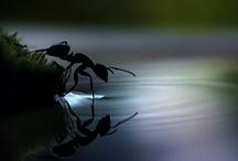 Photo, Image, Reflection
