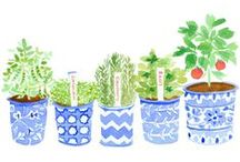 Illustrations- Leaves and Plants / illustration: leaves and plants.