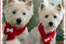 Westies are the Cutest!