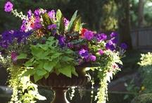 gardens and gardening / by Dottie Bassett