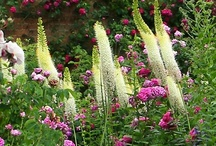 """~ Beaux Jardins ~ / """"Gardening is rewarding, it's another form of being creative and playing with color"""""""