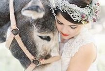Animals At Weddings / From pets to horses pulling carriages, here's how to include animals in the biggest day of your life.