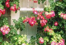 ~ Cottage On Strawberry Lane ~