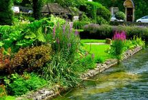 ~ Cottage in the Cotswalds ~ / The rolling hills of the Cotswalds populated with honey-color limestone villages in a beautiful rural setting -  English cottages and charming gardens abound, hence my reflection of a home and the serenity of a quiet village life... / by Pat Cole