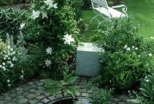 Garden and Yard / by Dorothy Gerlach