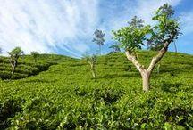 Exploring Sri Lanka