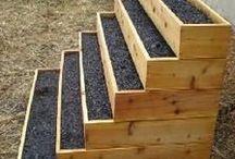 Green Fingers / Gardens & House Plant Tips, DIYs & Inspiration