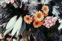 FLORA / by Kaitlyn Fox