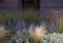 Garten & Co. / Sukkulenten, Pflanzendeko für drinnen und draußen, alles für den Garten und kleine Tipps