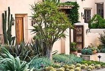 Arizona Garden / Native Sonoran plants for a beautiful landscape.  / by Simply Healthy Family