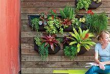 Green Roof & Vertical Gardens