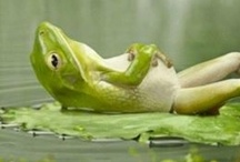 The art of relaxation / Relaxation at it's best and ideas for enhancing your free time.