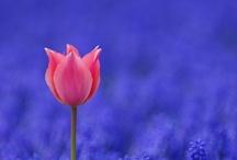 Flowers / by Jeannina Adams