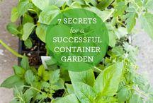 Grow / Growing plants, vegetables, and houseplants