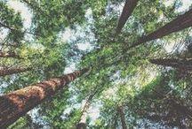 TREES / by Simone Wilson