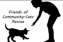 Animal Info. Rescues, Shelter, Networking