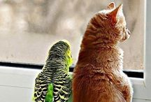 Animal families and unlikely animal friends