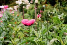 Flowers, Plants and Gardening 101 / Gardening. Plants. Flower and gardening ideas and stylish ways to update your outdoor and indoor space.