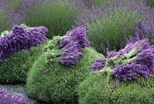 Garden Ideas & tips / by Traci Herger