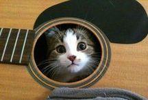 CATS / meow / by Jenna Mason