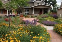 Alternative Lawns / Some inspiration and ideas for a non-turf lawn. Have fun with these groundcover and landscaping alternatives.