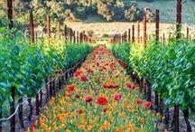 Wildflower Gardens / Create an inspirational meadow with beautiful native wildflowers.