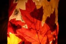 Fall Decorations / by Kelli White