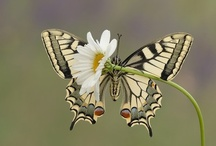 Butterflies are free! / by Sheila Gibson