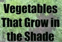 Tuin: Groenten - Moestuin / Groenten oogsten uit je eigen moestuin. Hoe begin je een moestuin? Tips en info over de natuurlijke moestuin, om zelf biologische groenten te laten groeien.