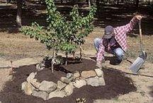 Tuin: Fruit-Noten-Zaden / Fruitbomen, notenbomen, kleinfruit, boomgaard, ...