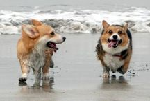 Corgis at the Coast / by Shirley Tinker