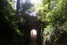 """The secret garden @  emmaus Brighton / Take a walk through the tunnel to the sanctuary that awaits in the secret garden at Emmaus Brighton. In 1901, the site that we call """"home"""" was put up for sale by auction and the garden (including the secret garden) was described as """"grandly-timbered pleasure grounds, fine lawns, grottos, charming shady walks and picturesque views of a former manor house..."""" You will see that little has changed over the last 100+ years."""