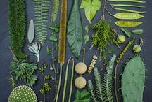 Leafy / by Natalie Ryan