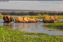 Safari Adventures - Vic Falls, Botswana, Zambezi River