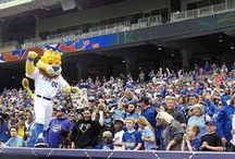 A Day in the Life of Sluggerrr