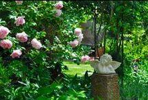Garten / Privater Naturgarten im Süden der Pfalz mit vielen Duftrosen, Stauden, Kräuter und Wildpflanzen. Romantische Gartenräume mit Sitzgelegenheit laden zum Verweilen ein.