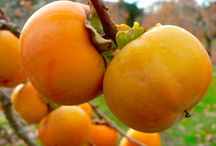 Use - Persimmons / How to use persimmons.