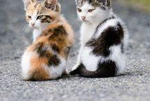 Cute things!