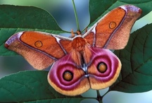 Butterflies and Moths / by Kathy Adams