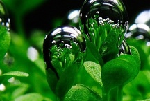 Beautiful Greens  / by Carolyn Withem