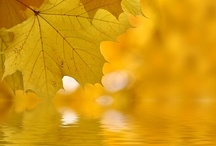 Beautiful Yellows / by Carolyn Withem