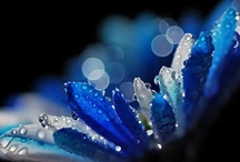 Beautiful Blues / by Carolyn Withem