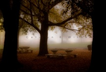 Landscapes / by Carolyn Withem