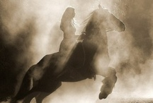 """Horses / """" The horse, with beauty unsurpassed, strength immeasurable and grace unlike any other, still remains humble enough to carry a man upon his back."""" -Amber Senti / by Amber Flowers"""