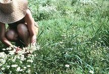 Garden. / by Emily Johnson