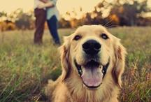 I love dogs  / by Serra Elle Arp