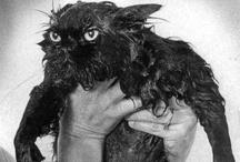 Cheshire cats
