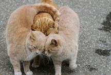 Kitty Love / by Jenny Jenkins