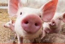 animal rights. /