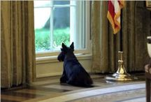 First Pets at The White House / by Kathy O'Connell